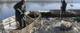 Rybářské slavnosti na Hluboké